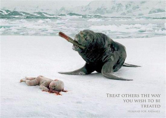 7ZlZpAPHAik 550x3921 Социальная реклама против убийства животных