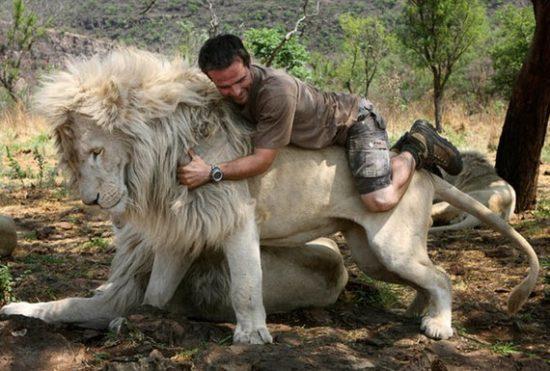 1 191 550x371 Кевин по прозвищу Лев