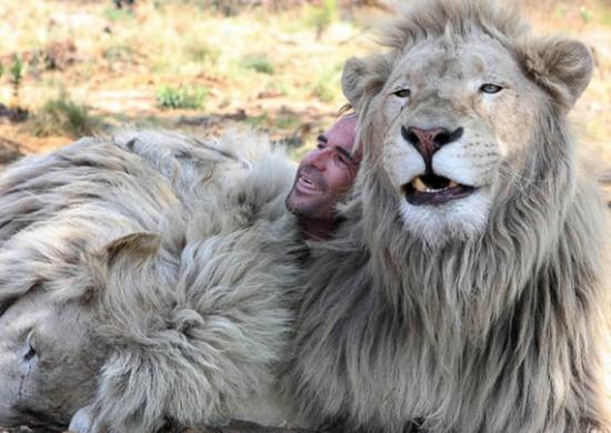 5 0 550x390 Кевин по прозвищу Лев