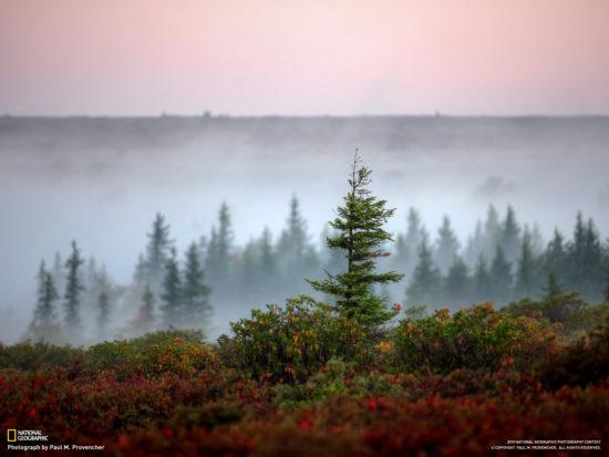 Bear Rocks Preserve Zahidna Virdzhiniya SSHA. Avtor foto Paul M. Provencher 550x413 Живописная природа США