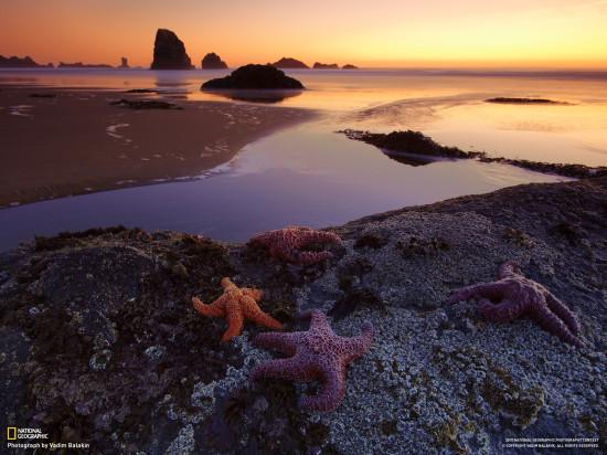 Indian Beach Oregon SSHA. Avtor foto Vadim Balakin Vadim Balakin 550x412 Живописная природа США