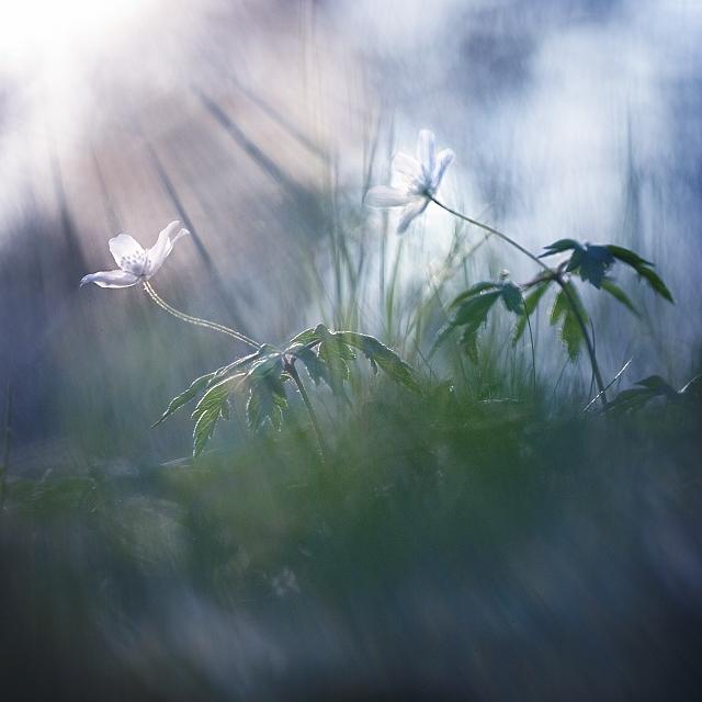 цветом, формой фото цветы в тумане фото рамках