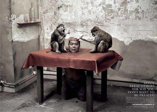 Sotsialnaya reklama protiv ubijstva zhivotnyh Ne postupajte tak kak ne hotite chtoby postupali s Vami 550x392 Социальная реклама против убийства животных