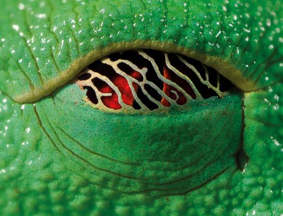 eyevine 550x421 Око дракона