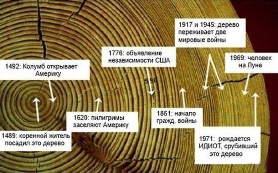 oFfzT6pSkGA 550x342 История дерева