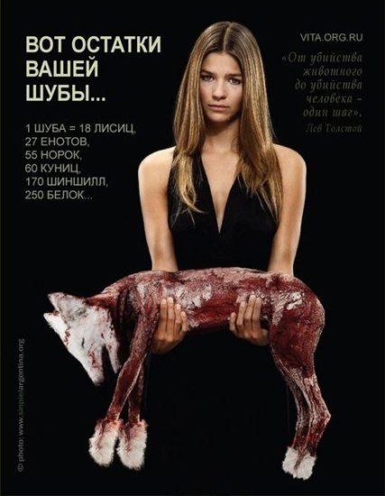 wzwPcvIID0M 427x550 Социальная реклама по защите природы
