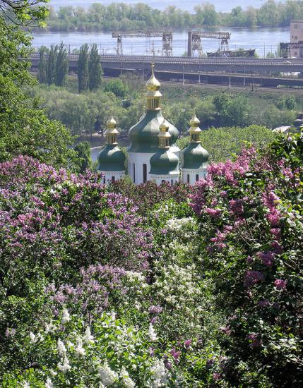 0 98089 18748e08 XL 429x550 Сирень в Киеве