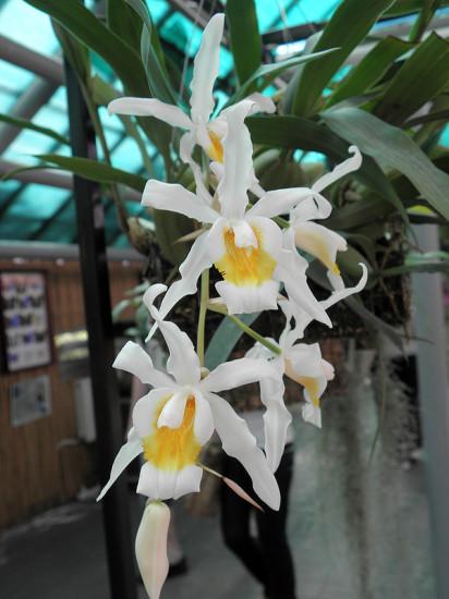 0 999b9 41893a5f XL 412x550 Орхидеи