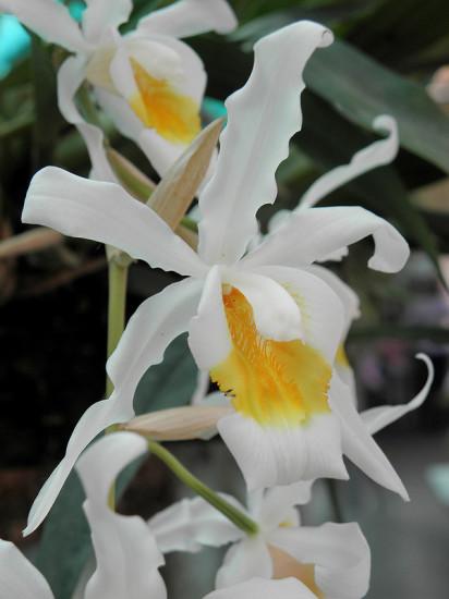 0 999ba e9247834 XL 412x550 Орхидеи