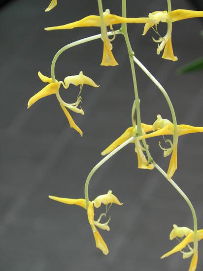 0 999bc 6eeec6e4 XL 412x550 Орхидеи