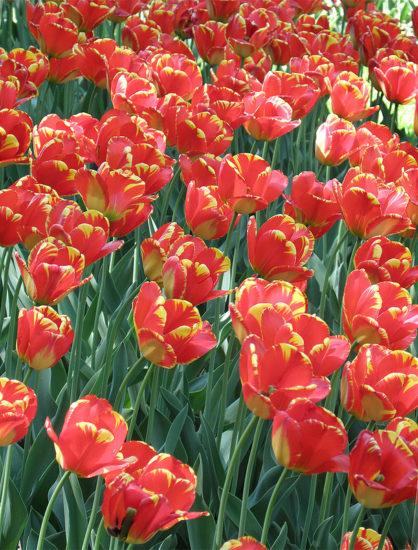 0 999c6 742cd40d XL 418x550 Киевский ботанический сад им. Гришко