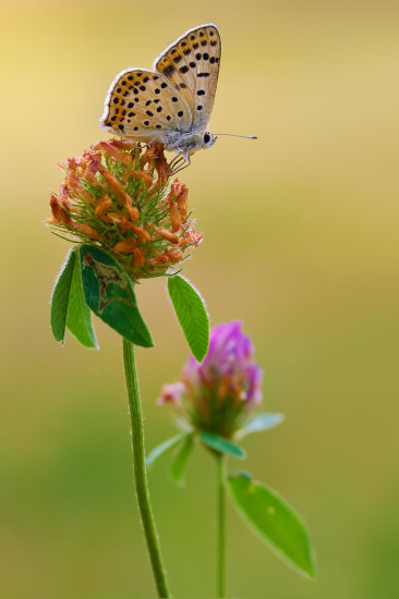 0 dd0bc 87a84f53 orig 366x550 Фантастические макроснимки насекомых от Boris Godfroid