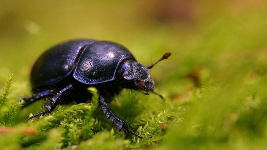 0 dd0bd 9b5529c2 orig 550x309 Фантастические макроснимки насекомых от Boris Godfroid