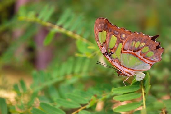 0 dd0c0 66c65f97 orig 550x367 Фантастические макроснимки насекомых от Boris Godfroid