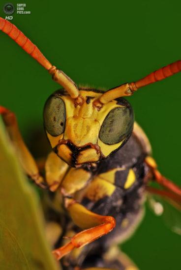 0 dd0c3 1ddfeb72 orig 368x550 Фантастические макроснимки насекомых от Boris Godfroid