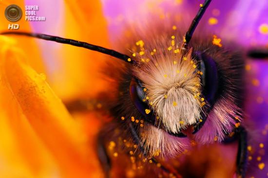 0 dd0c4 d4a23eec orig 550x366 Фантастические макроснимки насекомых от Boris Godfroid
