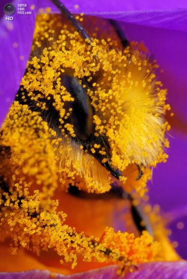 0 dd0c7 eb9a57ee orig 368x550 Фантастические макроснимки насекомых от Boris Godfroid