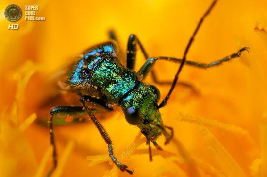 0 dd0c8 e02fd462 orig 550x364 Фантастические макроснимки насекомых от Boris Godfroid