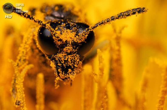 0 dd0c9 da2285 orig 550x364 Фантастические макроснимки насекомых от Boris Godfroid