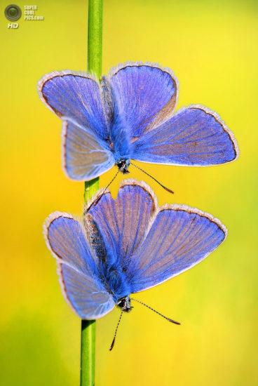 0 dd0ca 534189cf orig 368x550 Фантастические макроснимки насекомых от Boris Godfroid