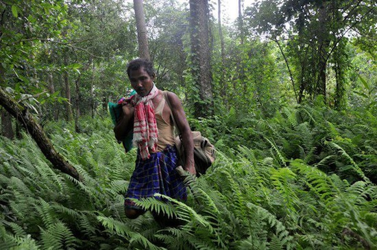 59 Джадав Пайенг   посвятил свою жизнь выращиванию леса