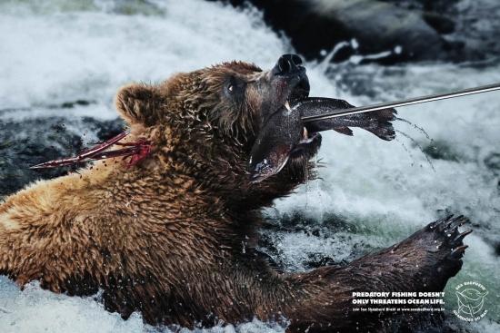 02 Sea Shepherd Экологическая социальная реклама