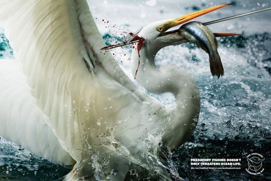 03 Sea Shepherd Экологическая социальная реклама