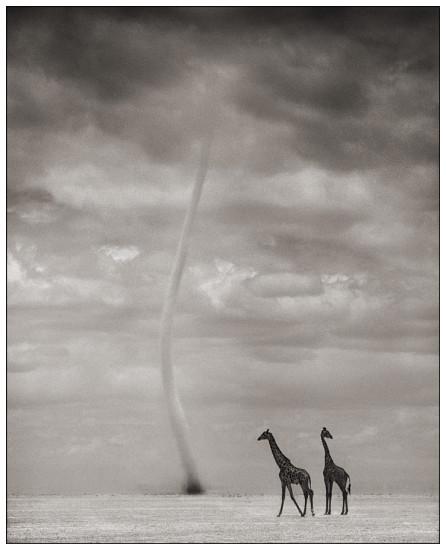10 446x550 Африка от Ника Брандта
