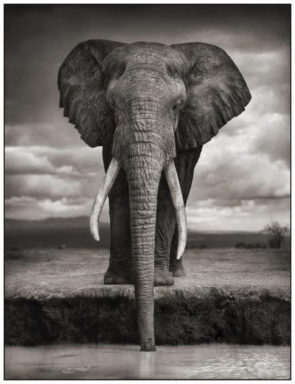12 423x550 Африка от Ника Брандта