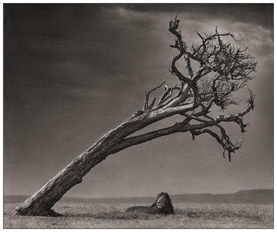 15 550x461 Африка от Ника Брандта