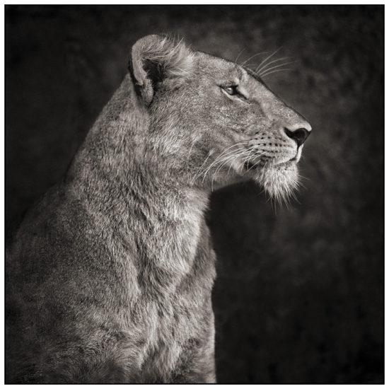 24 550x550 Африка от Ника Брандта