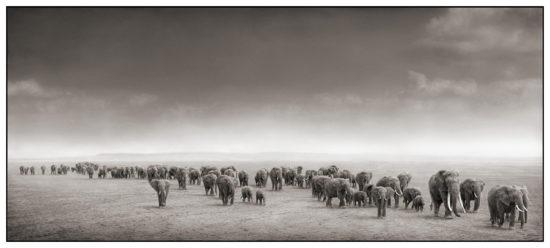 31 550x248 Африка от Ника Брандта
