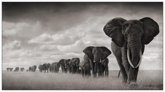 8 550x308 Африка от Ника Брандта