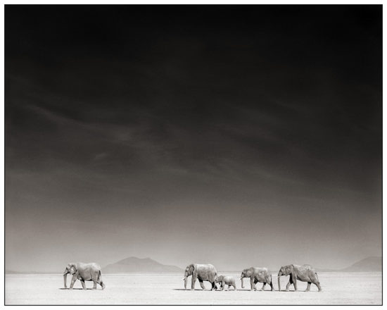 9 550x440 Африка от Ника Брандта