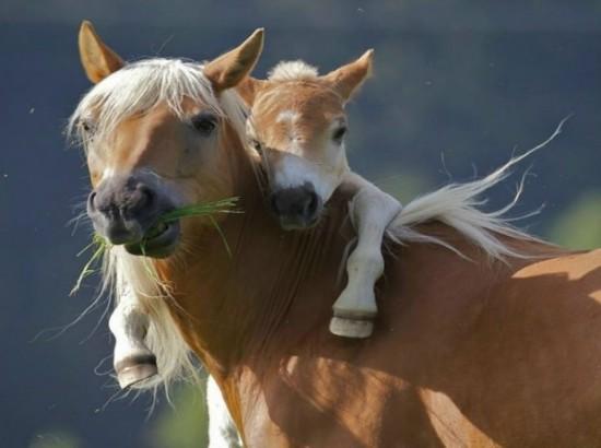 Zhivotnye i ih detenyshi 550x410 Отцы и дети у животных