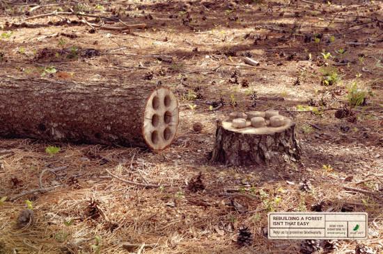 ads 6 15 envol vert 550x366 Восстановить лес не так просто