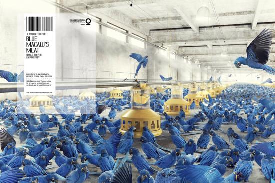 ads 6 18 conservation international 550x366 Когда есть экономический интерес, люди находят решения...