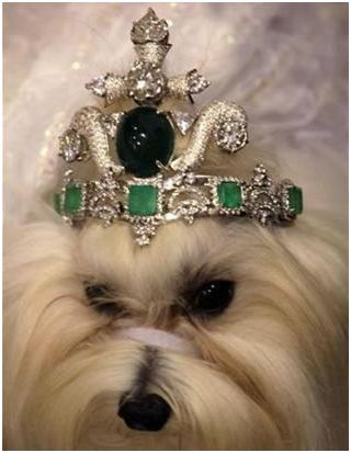 diamond tiara for dog А в Африке дети голодают!