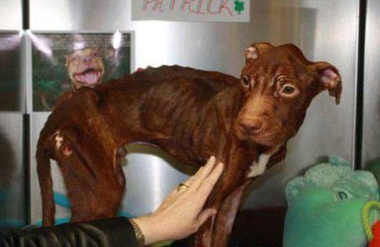 dog 02 550x358 Удивительное преображение брошенной собаки