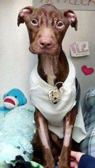 dog 03 Удивительное преображение брошенной собаки