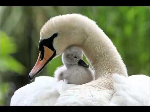 hqdefault3 Отцы и дети у животных