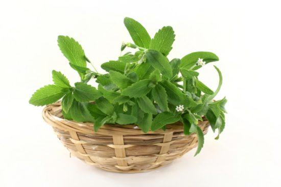 stevia 1 550x367 Стевия: сахарное растение