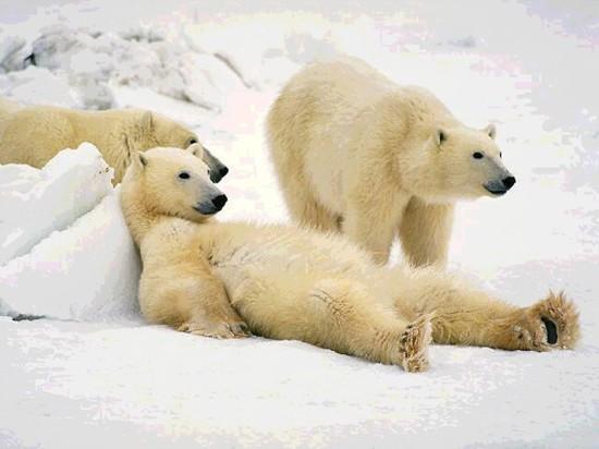 www animaljpg ru 257 550x412 Релакс в исполнении животных