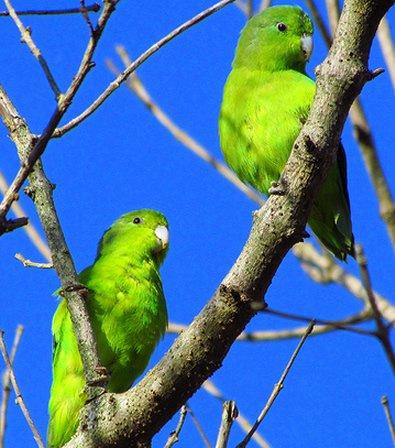 00wbzd51 Из жизни попугаев