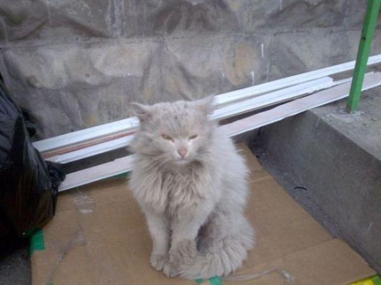11 550x412 Спасённые кошки