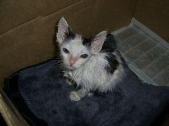 111 550x412 Спасённые кошки