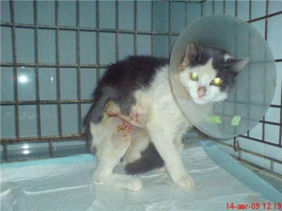 131 550x412 Спасённые кошки