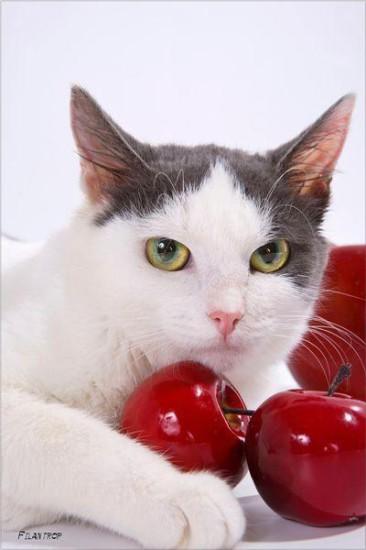 14 366x550 Спасённые кошки