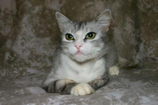 161 550x365 Спасённые кошки