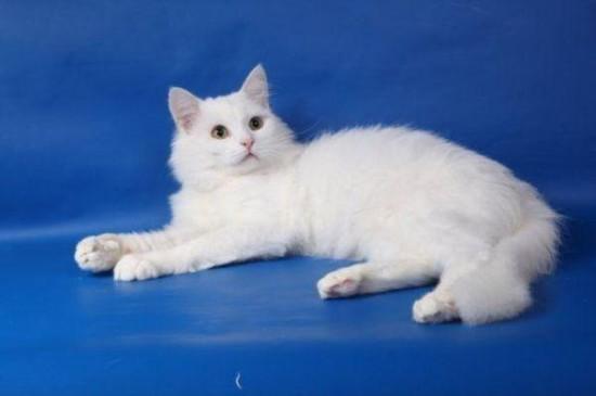 2 550x365 Спасённые кошки